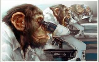 Эффект сотой обезьяны, или закон распространения информации