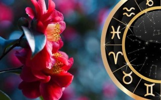 Как выбрать себе цветок талисман