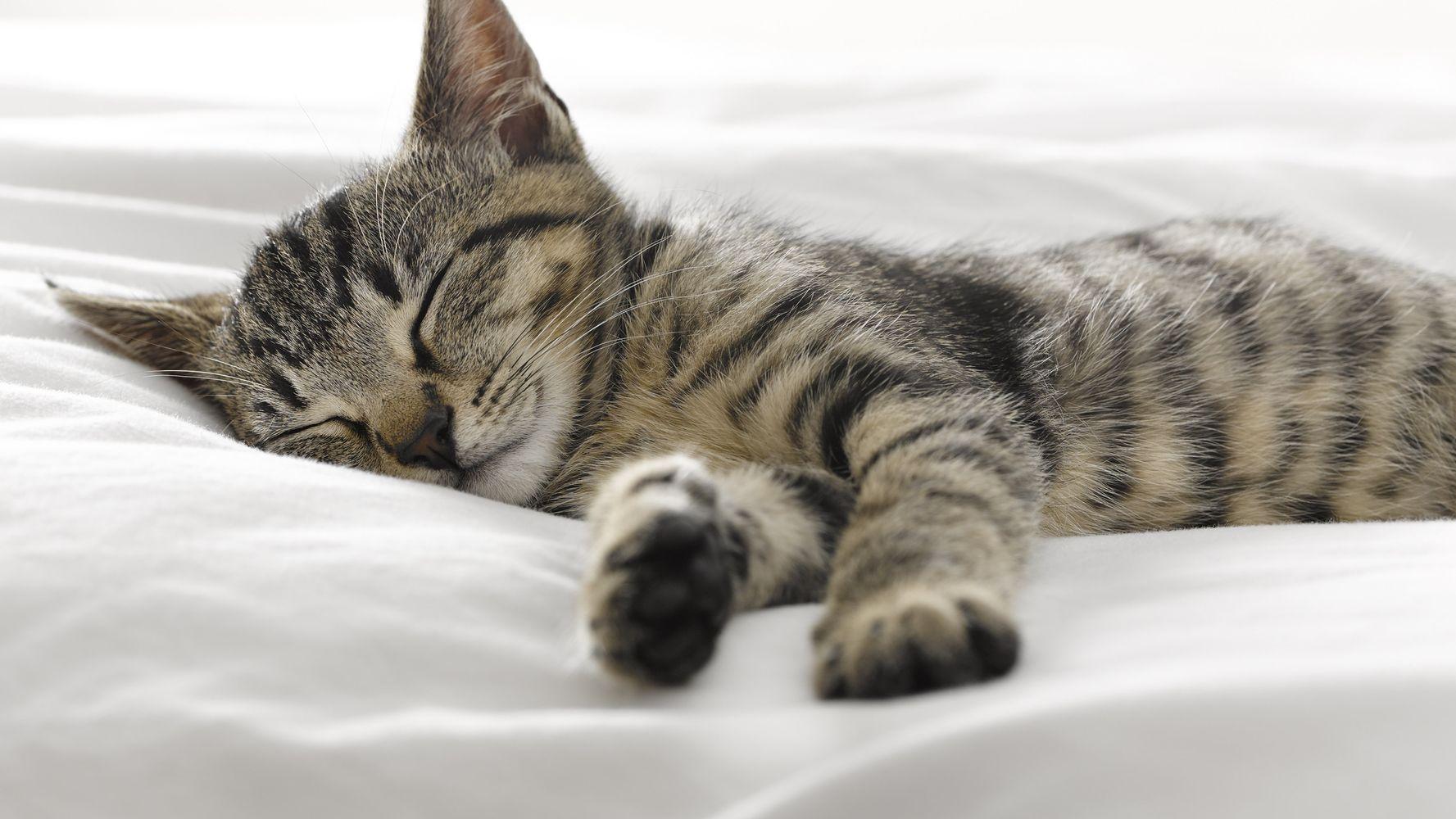 Фазы сна — их значение и особенности